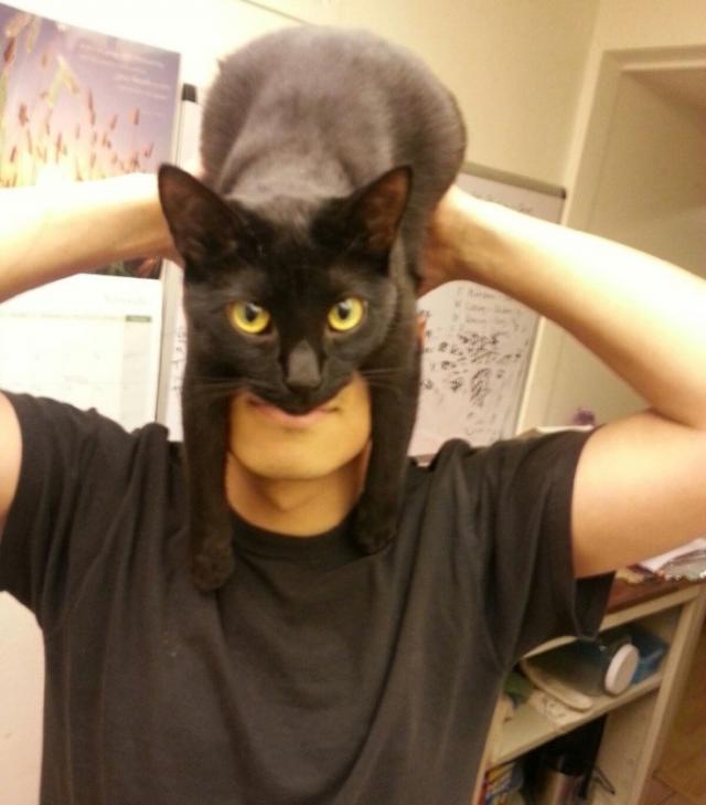 Фотография кота, ставшая интернет-мемом (20 фото)