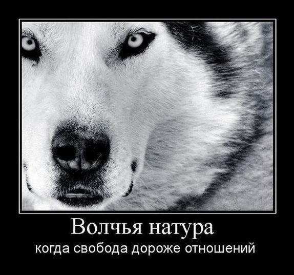 Волчья натура когда свобода дороже отношений