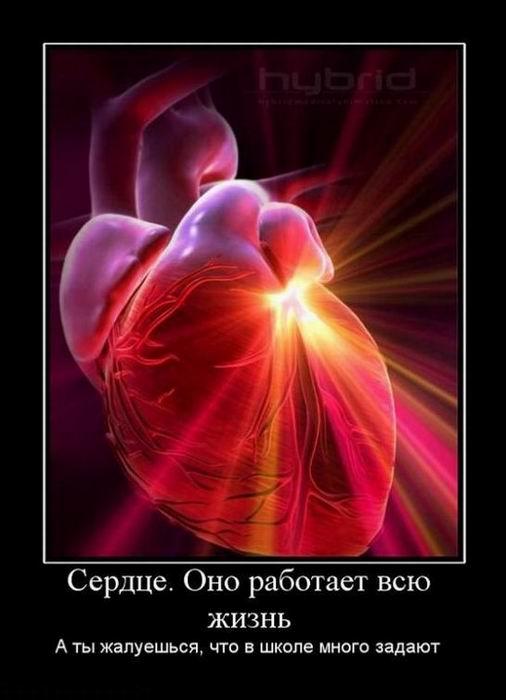 Сердце. Оно работает всю жизнь