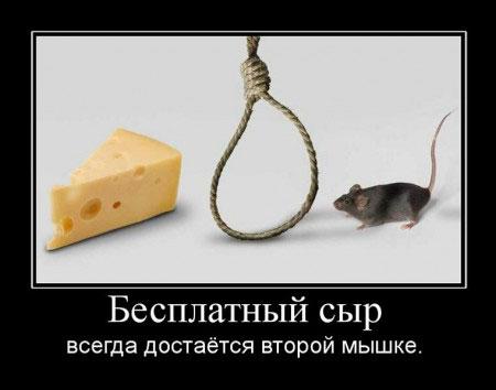 Бесплатный сыр всегда достаётся второй мышке