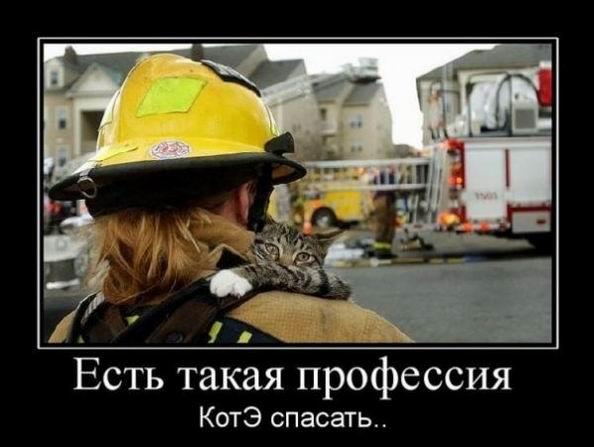 Есть такая профессия котэ спасать