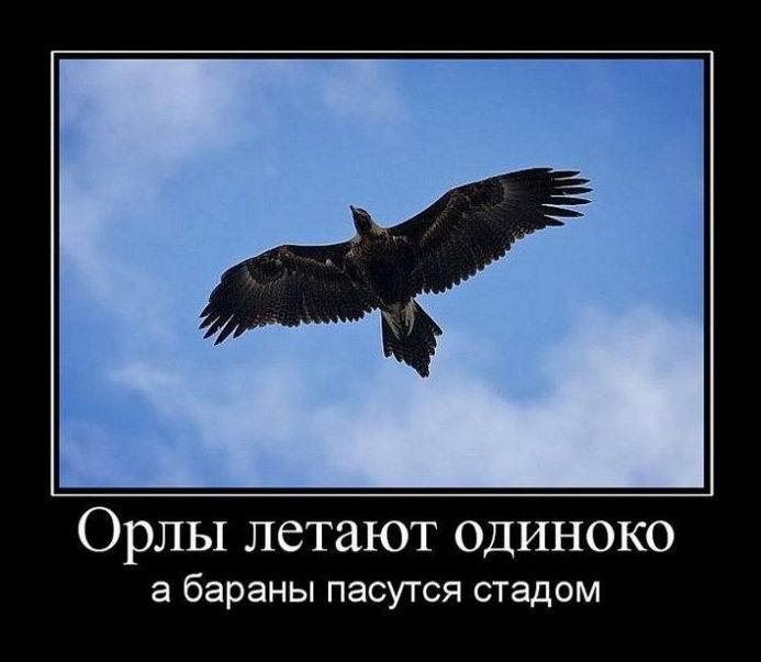 Орлы летают одиноко