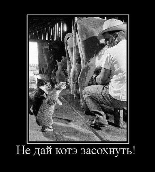 Не дай котэ засохнуть!