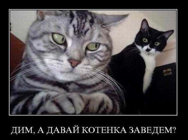 Дим, а давай котенка заведем?