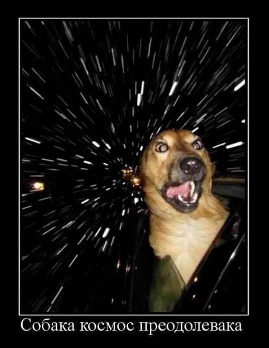 Собака космос преодолевака