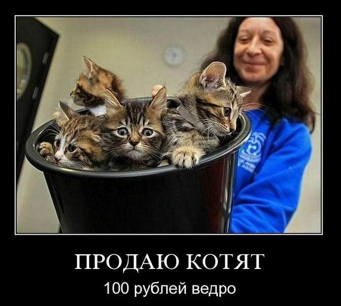 Продаю котят, 100 рублей ведро