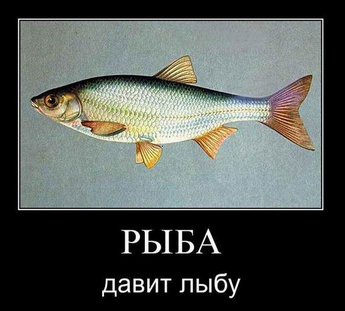 Рыба давит лыбу