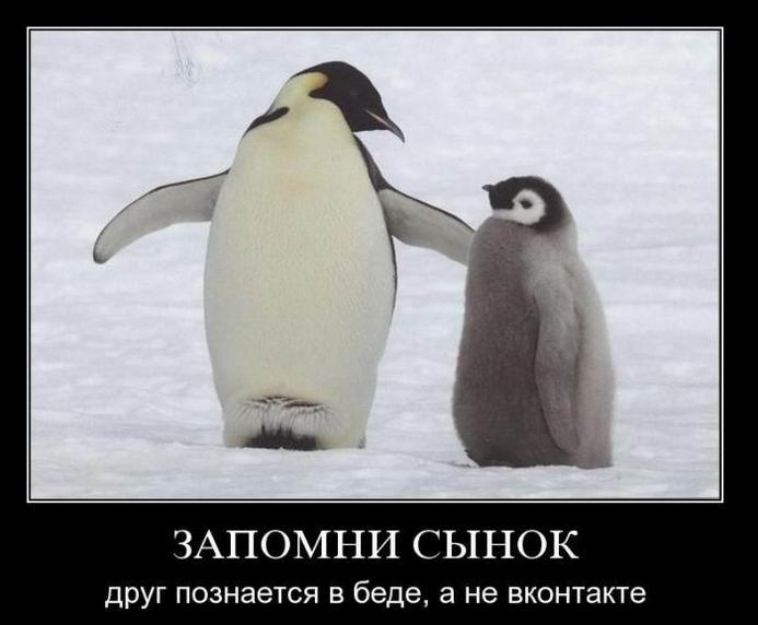 Демотиваторы про эпиляцию по старорусски, друг познается в беде и парни любят начитанных девушек (197 часть, 50 фотографий)