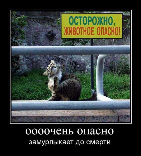 Осторожно, животное огпасно!