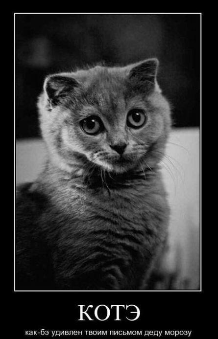 Кот как-бы удивлен