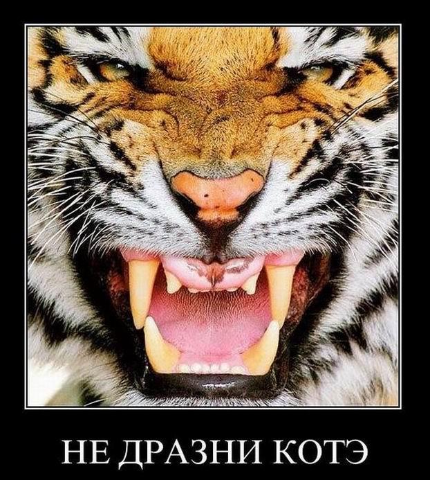 Не дразни кота