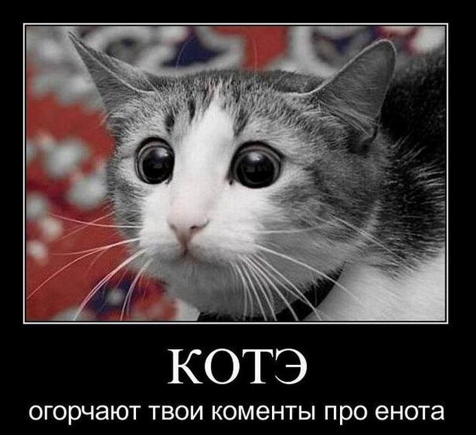 Кота огорчают твои коменты про енота