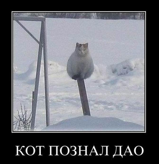 Кот познал дао
