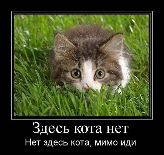 Здесь кота нет