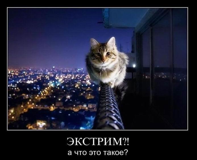 Демотиваторы про мартовского кота, лучше синица в руках и красота - страшная сила (263 часть, 50 фотографий)