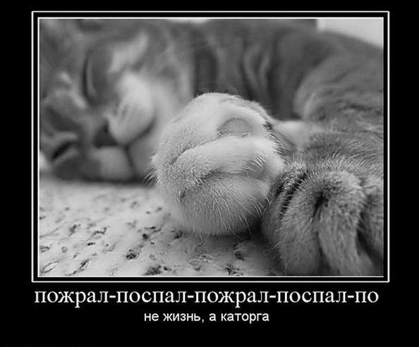 Пожрал-поспал-пожрал-поспал...