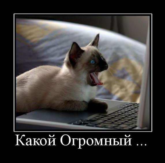 Кот серфит интернет