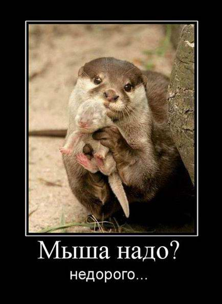 Мыша надо? Недорого