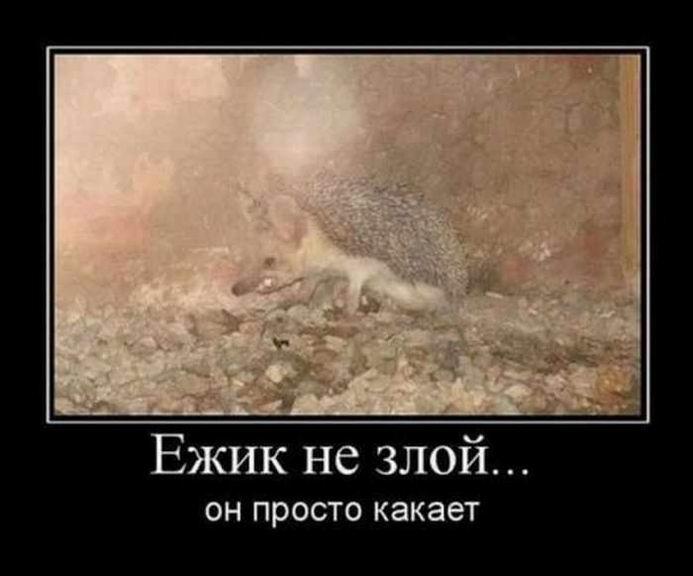 http://jokesland.net.ru/dem/demotivatory_450/13.jpg