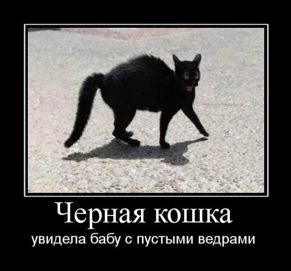 Черная кошка увидела бабу с пустыми ведрами