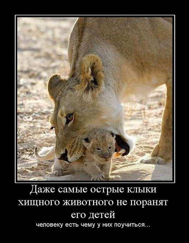 Острые клыки хищного животного не поранят его детей