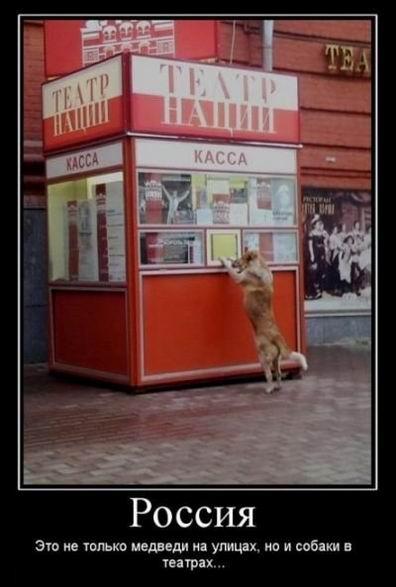 Россия. Это не только медведи на улицах