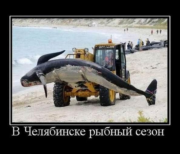 В Челябинске рыбный сезон