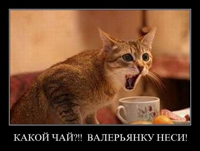 Какой чай?! Валерьянку неси!