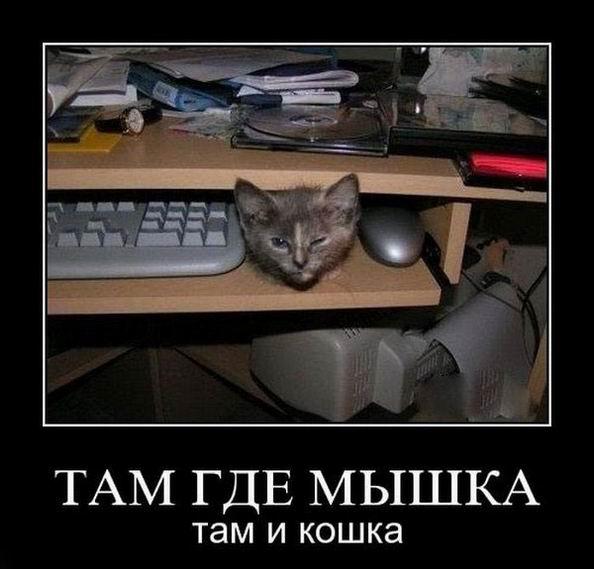 Там где мышка, там и кошка