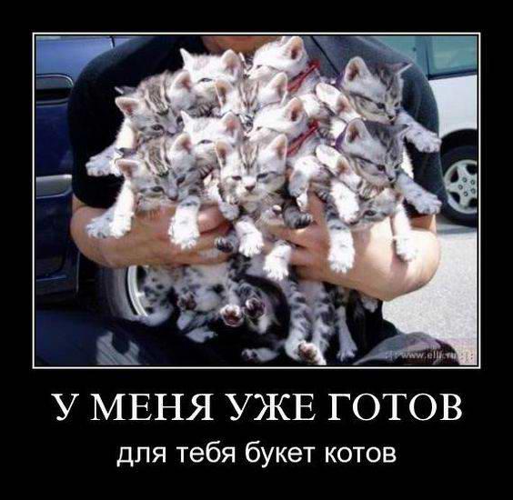 У меня уже готов для тебя букет котов