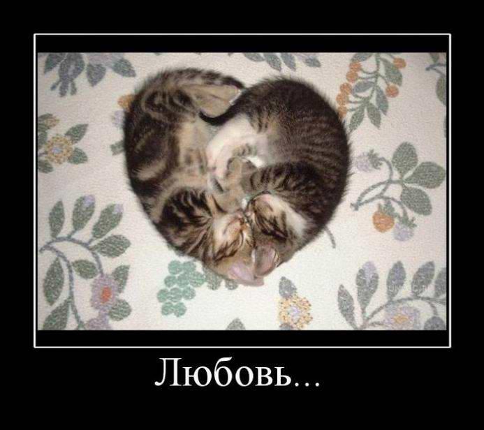 Любовь по кошачьи