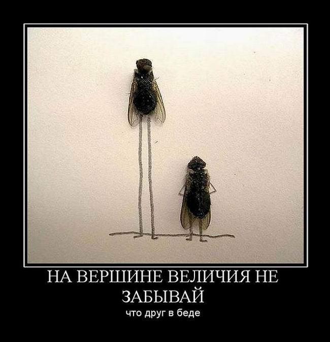 На вершине величия не забывай, что друг в беде