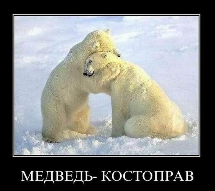 Медведь–костоправ