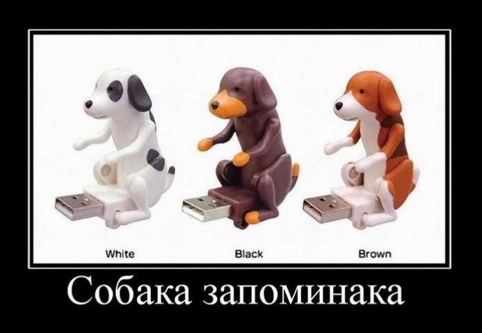 Собака запоминака