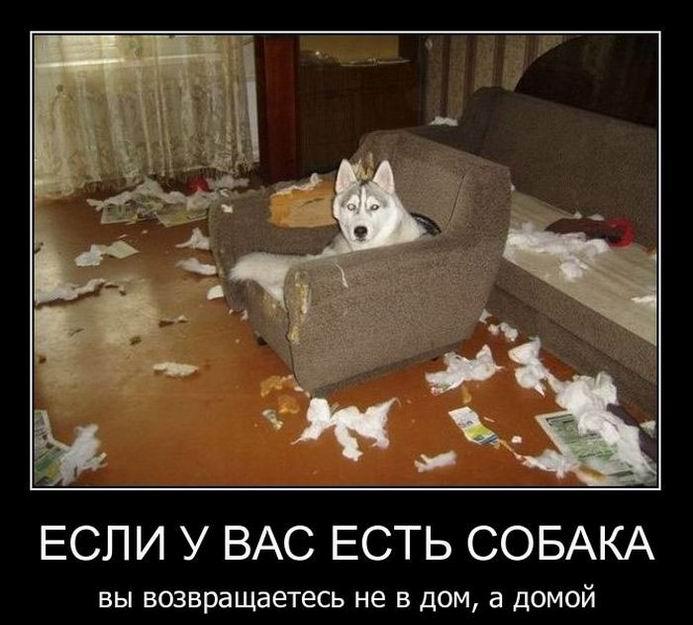 Если у вас есть собака