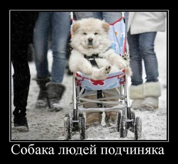 Собака людей подчиняка