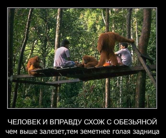 Человек и вправду схож с обезьяной