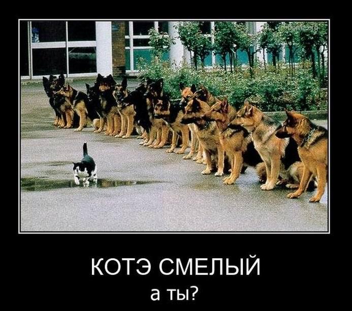 Кот смелый