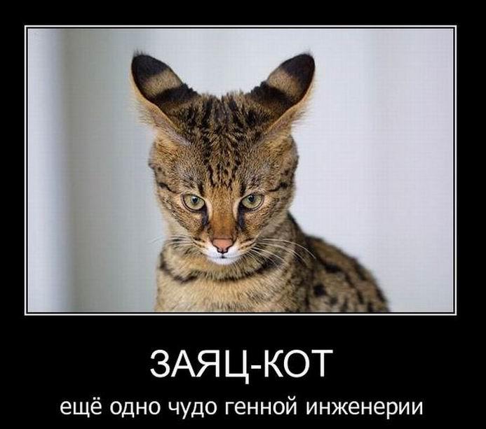 Заяц-кот