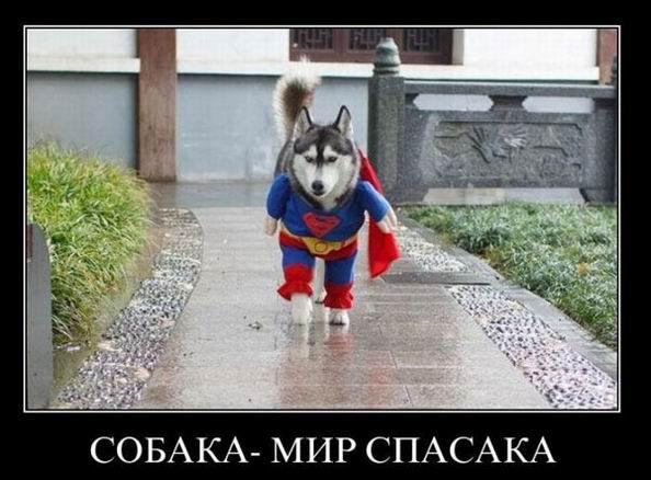Собака мир спасака