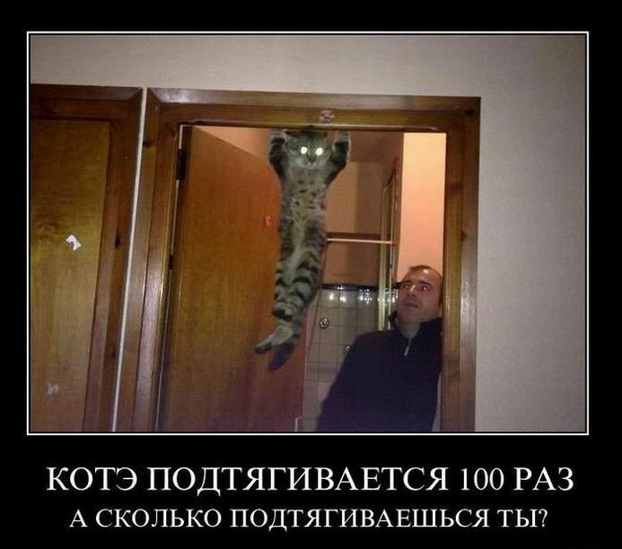 Кот подтягивается 100 раз