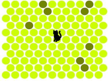 Загони хитрую кошку в угол - Catching the Crafty Cat