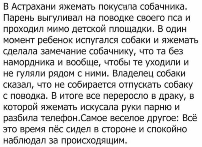 В Астрахани яжемать покусала собачника