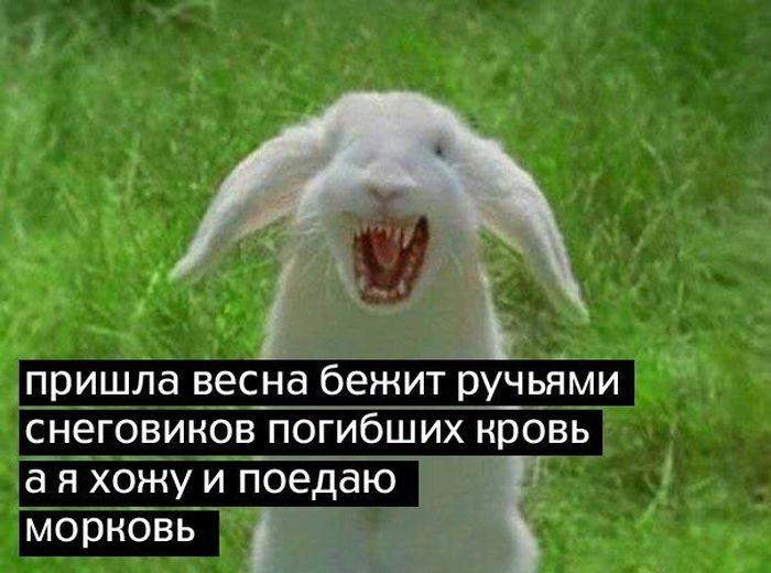 Приходит кролик в публичный дом