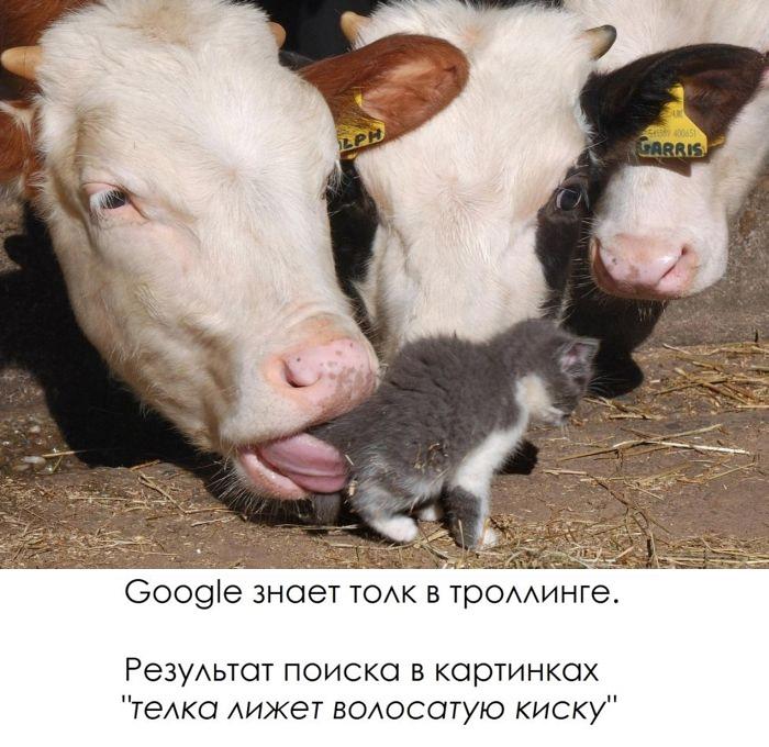 Google знает толк в троллинге