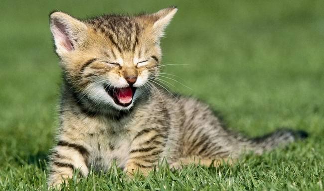Седовласая дева отдыхала на веранде со своим любимым котом, как вдруг появилась фея