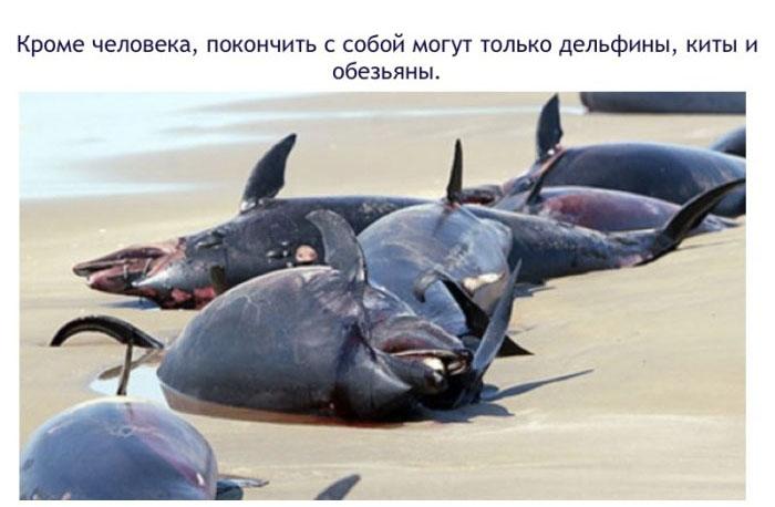Дельфины могут покончить собой