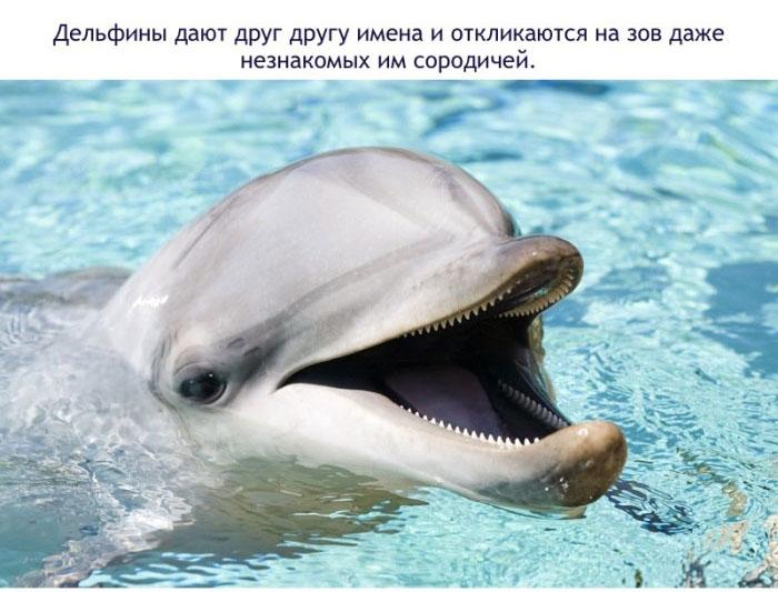 Дельфины дают друг другу имена