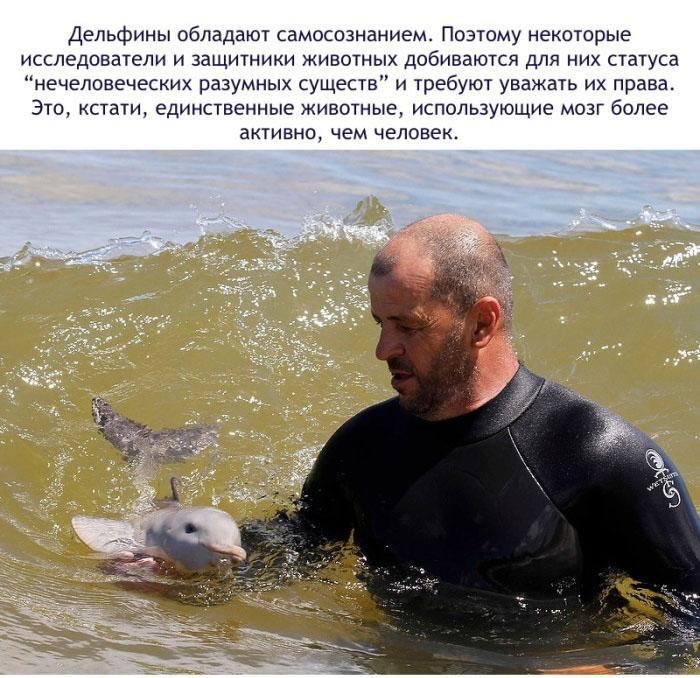 Дельфины обладают самосознанием