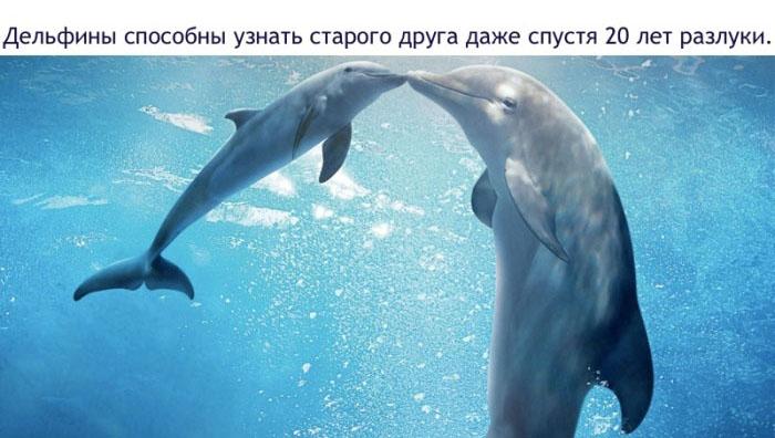 Дельфины способны узнать старого друга